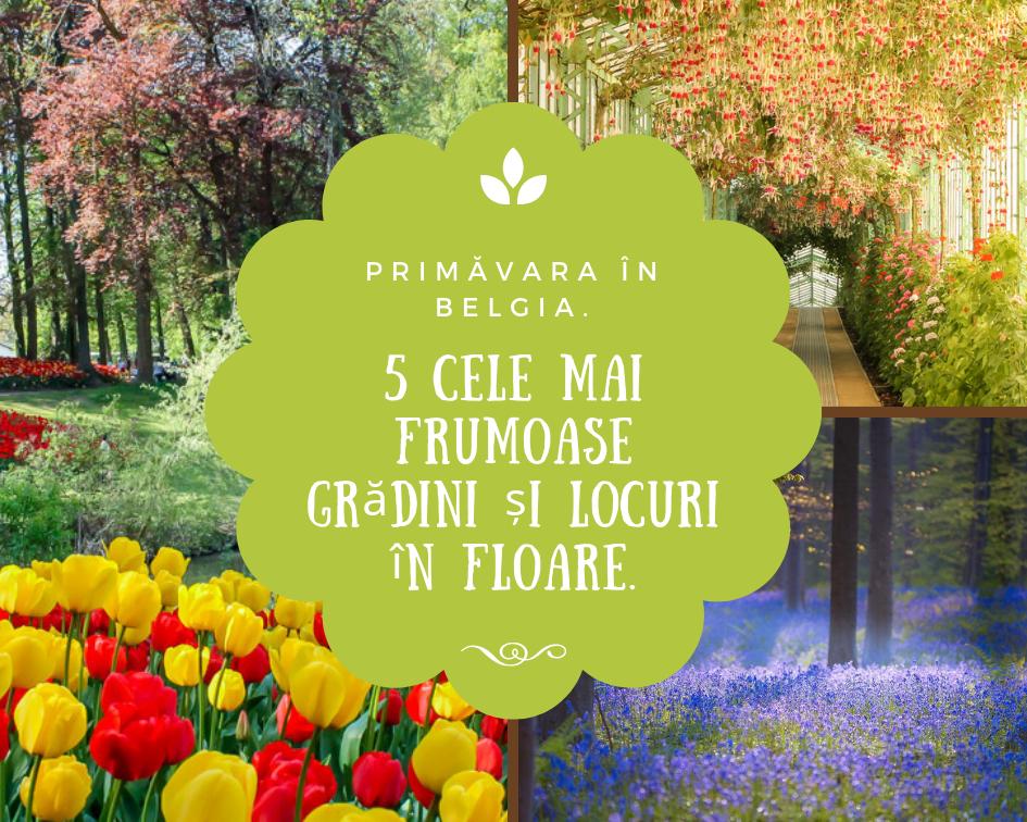 Primavara in Belgia. 5 cele mai frumoase gradini si locuri in floare